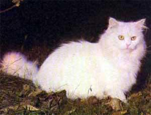 20060510215850-gato.jpg
