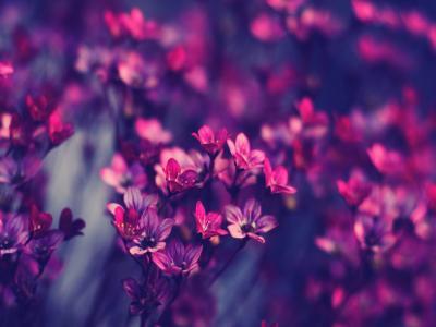 20121231015242-violeta.jpg