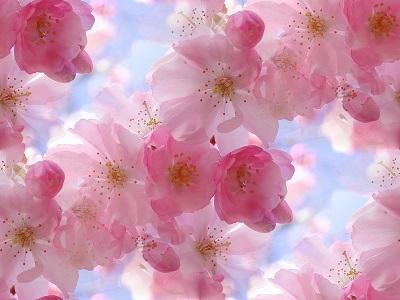 20130401175623-floress.jpg