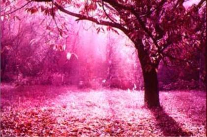 20121209164746-rosa.jpg