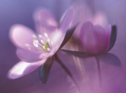 20130101173819-violetta.jpg