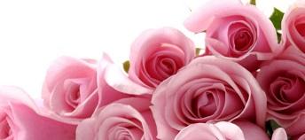 20130817161717-rosasss.jpg